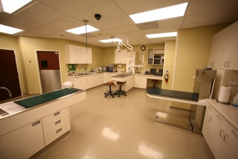 Fairway-Animal-Hospital-Treatment-1-Web-487x325