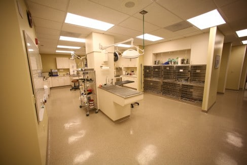 Fairway-Animal-Hospital-Treatment-2-Web-487x325