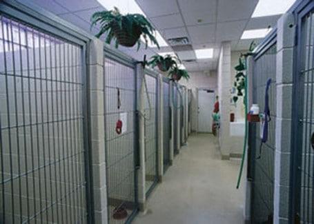 Schrag-Animal-Clinic-Run-1-Web-455x325